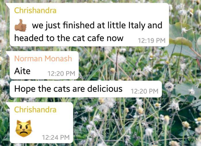 7 tasty cats